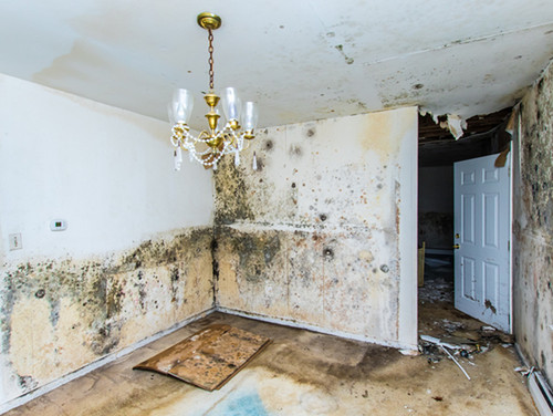 Mold Inspection & Removal | Union Restoration