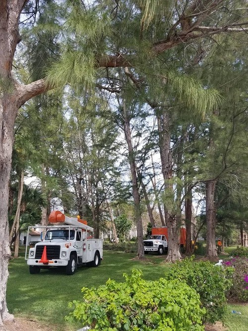 Tree Installation | Distinctive Property Maintenance
