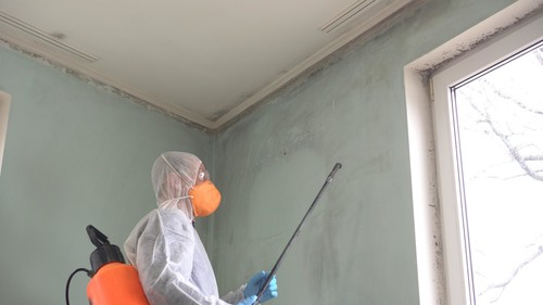 Mold Remediation | Usa Restoration