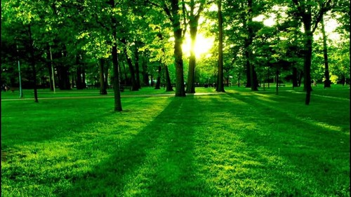 Lawn Care | Green Square Lawn