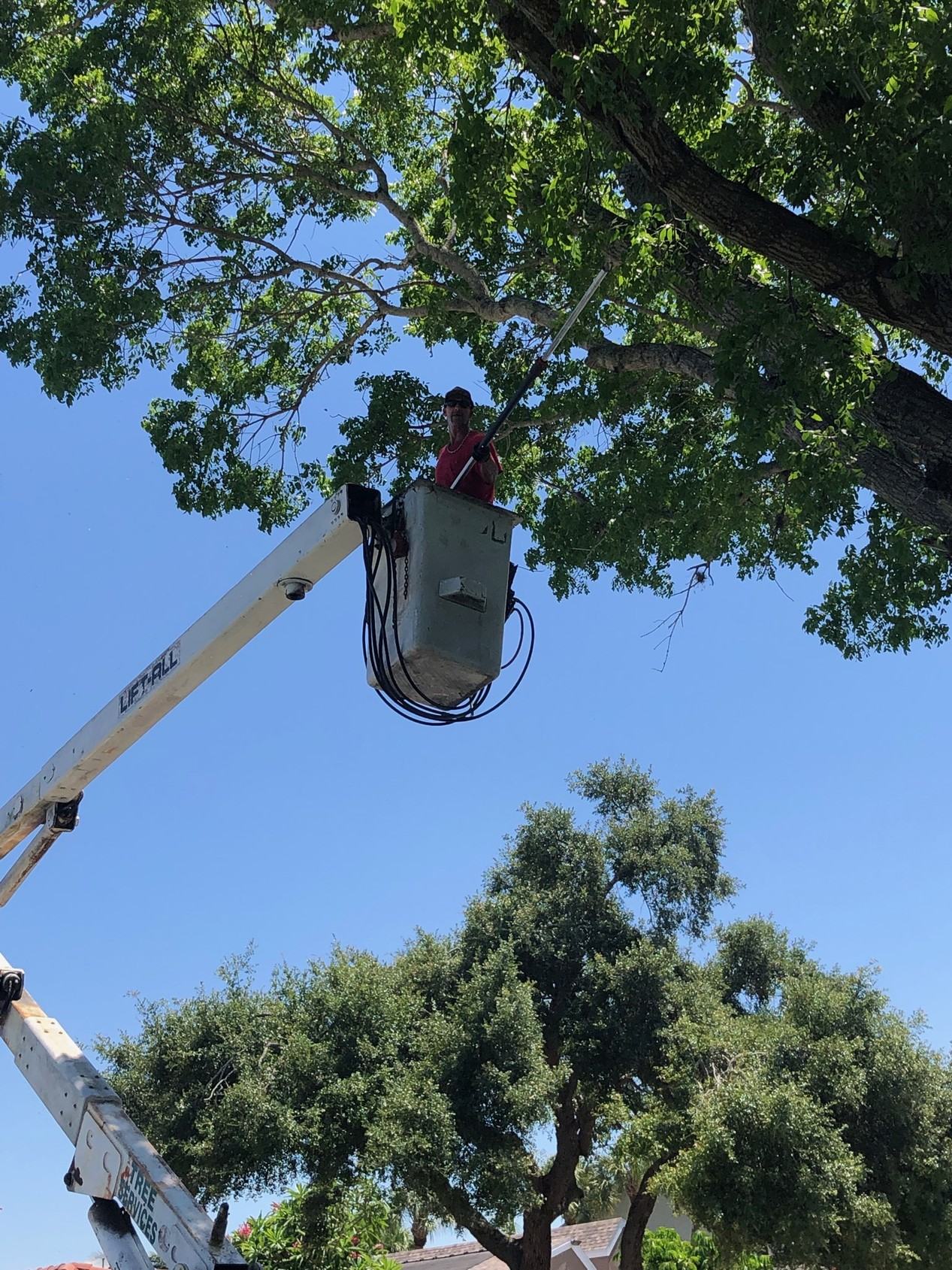 Tree Service Pictures