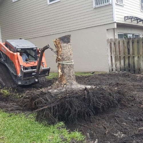 Tree Trimming | Distinctive Property Maintenance