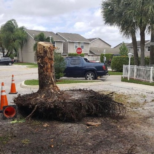 Tree Services | Outside Unlimited