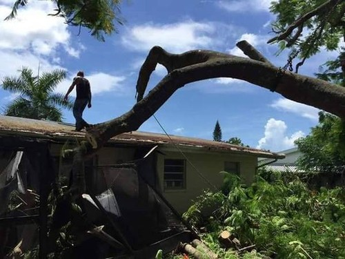 Monster Tree Trimming | Monster Tree Service of Southwest-Florida