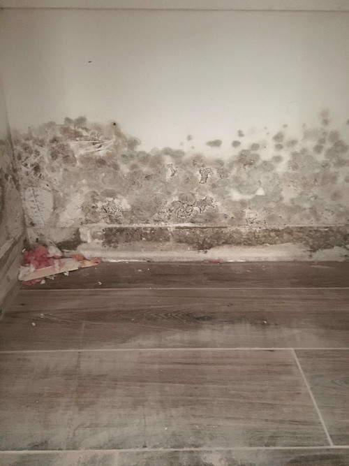 Mold Remediation | Airs