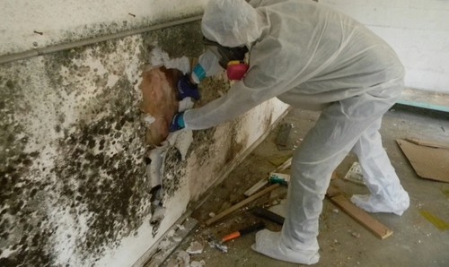 Mold Remediation | the Mold Pros